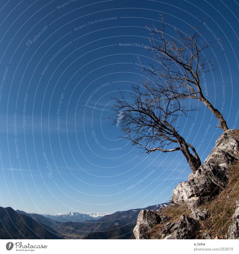 Baumgrenze. Mädchenblick. Natur Landschaft Urelemente Wolkenloser Himmel Schönes Wetter Moos Felsen Alpen Berge u. Gebirge Gipfel trocken blau Einsamkeit rein