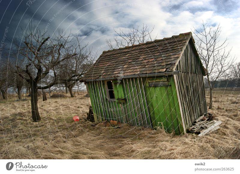Zimmer frei Häusliches Leben Garten Umwelt Natur Landschaft Pflanze Himmel Wolken Horizont Klima Wetter Schönes Wetter Wind Baum Gras Sträucher karg Hütte Holz