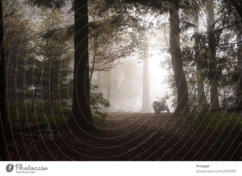 Ausflug Natur weiß grün Baum Pflanze Einsamkeit schwarz ruhig Wald Erholung Umwelt Herbst Freiheit Nebel Abenteuer