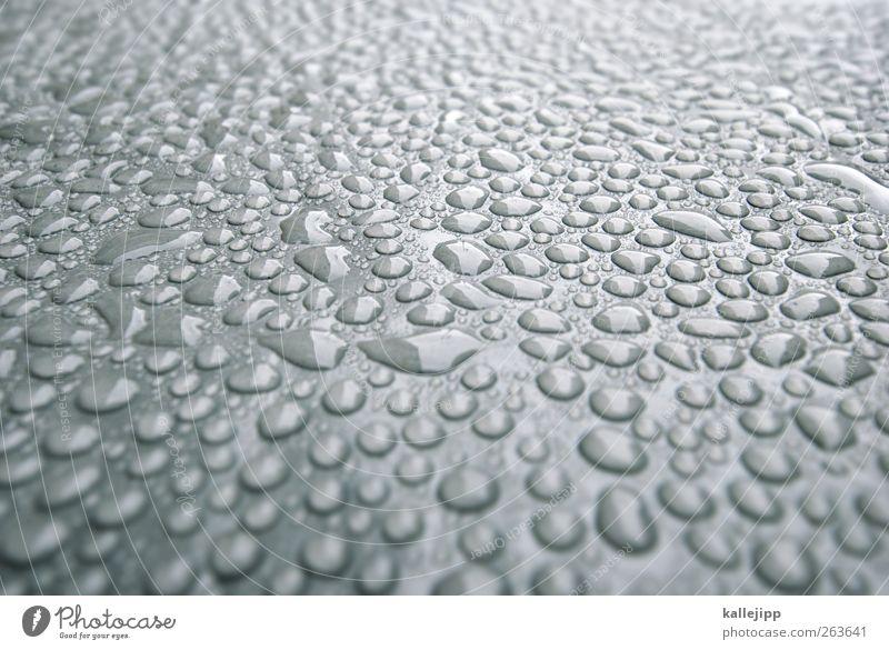 schreibtischhintergrund Natur Wasser Umwelt Regen nass frisch viele Regenwasser feucht Kondenswasser