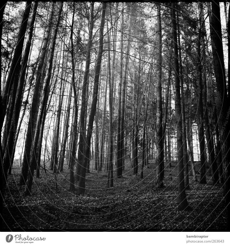 Bäume I Natur Baum Pflanze Wald Ferne Umwelt Landschaft Ast analog
