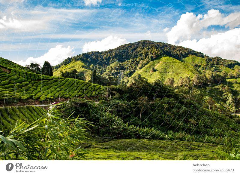 tee geht immer Himmel Ferien & Urlaub & Reisen Natur Pflanze grün Landschaft Wolken Blatt Ferne Berge u. Gebirge Tourismus außergewöhnlich Freiheit Ausflug Feld