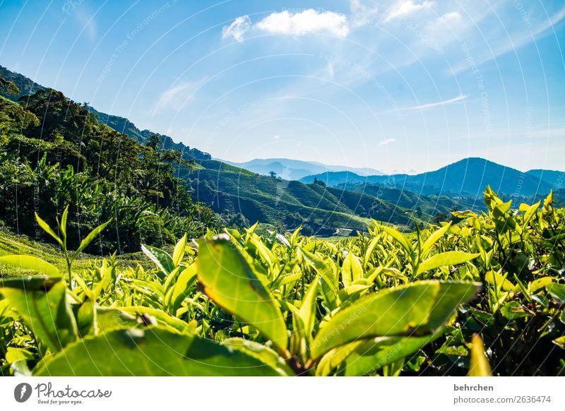 ein kännchen tee Himmel Ferien & Urlaub & Reisen Natur Pflanze schön grün Landschaft Wolken Ferne Berge u. Gebirge Tourismus außergewöhnlich Freiheit Ausflug