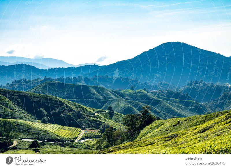 teatime Himmel Ferien & Urlaub & Reisen Natur Pflanze blau grün Landschaft Baum Blatt Ferne Berge u. Gebirge Straße Tourismus außergewöhnlich Freiheit Ausflug