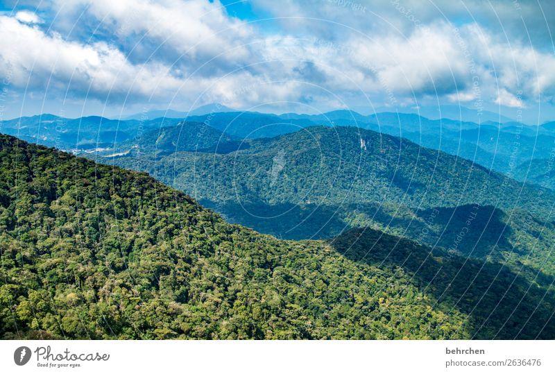 klimawandel | lebenswichtiger regenwald! Klimaschutz Klimawandel fantastisch blau traumhaft Wolken Sträucher Umweltschutz Blatt Himmel Baum Feld Nutzpflanze