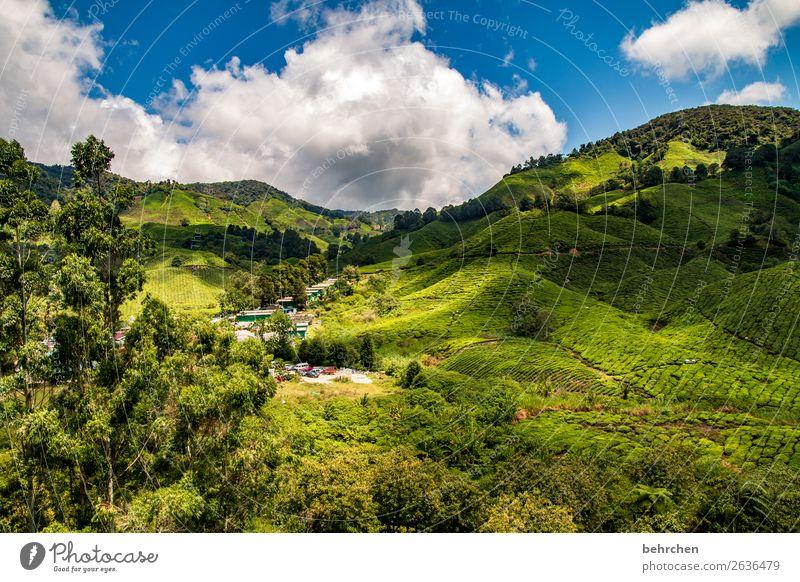 wonderland Himmel Ferien & Urlaub & Reisen Natur grün Landschaft Baum Wolken Blatt Ferne Berge u. Gebirge Umwelt Tourismus außergewöhnlich Freiheit Ausflug Feld