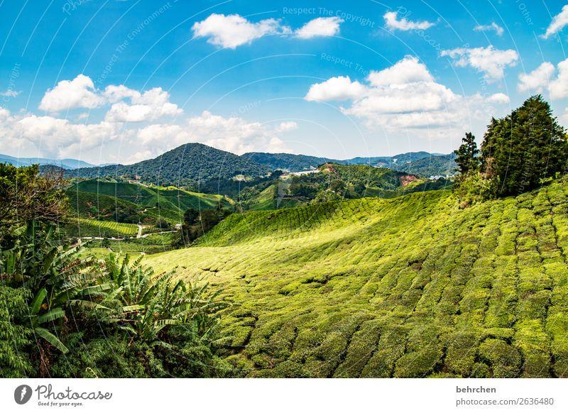 märchenlandschaft Himmel Ferien & Urlaub & Reisen Natur Pflanze grün Landschaft Baum Wolken Ferne Berge u. Gebirge Tourismus außergewöhnlich Freiheit Ausflug