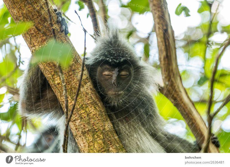 immer wieder montags... Ferien & Urlaub & Reisen Natur Pflanze Baum Erholung Tier Blatt Ferne Tourismus außergewöhnlich Freiheit Ausflug Wildtier Abenteuer