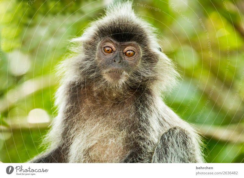 was denke ich? | gedankenspiele Ferien & Urlaub & Reisen Baum Tier Ferne Auge Tourismus außergewöhnlich Freiheit Ausflug nachdenklich Wildtier Abenteuer