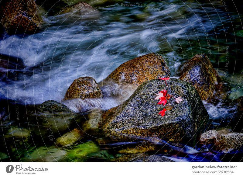 kanadische Urgewalten Natur Pflanze blau Wasser weiß rot Blatt schwarz Umwelt natürlich außergewöhnlich Stein braun grau Zufriedenheit wild