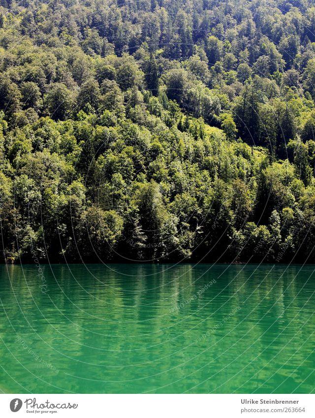 Water Green II Ferien & Urlaub & Reisen Tourismus Ausflug Sommer Berge u. Gebirge Natur Landschaft Pflanze Wasser Schönes Wetter Baum Alpen Schlucht Königssee