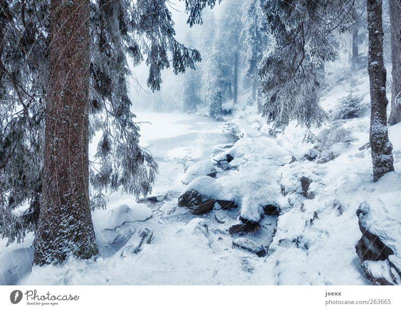 Der Eine geht … Natur Winter Nebel Schnee Baum Wald Seeufer Wege & Pfade groß kalt blau braun schwarz weiß Idylle Mummelsee Winterwald Farbfoto Gedeckte Farben