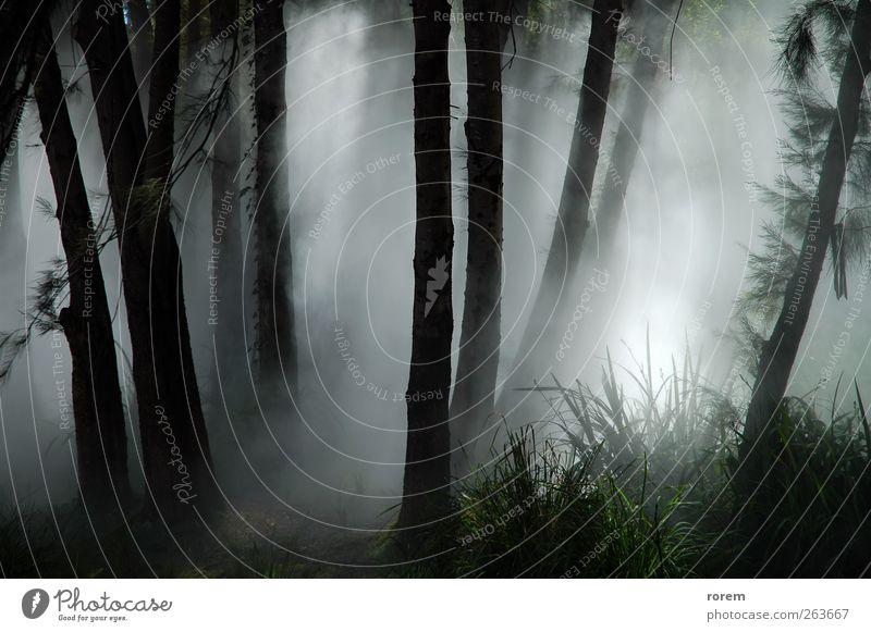 Natur Pflanze Sonne Baum Landschaft Blatt Wald Umwelt Herbst grau Park Wetter Nebel nass geheimnisvoll Unwetter