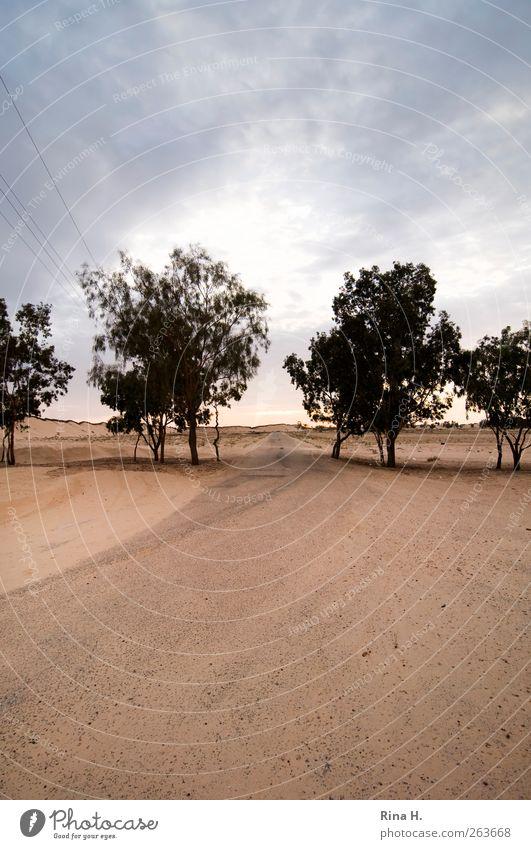 FrühStunde Ferien & Urlaub & Reisen Natur Landschaft Himmel Horizont Herbst Wärme Baum Küste Wüste Oase Tunesien natürlich gelb Wege & Pfade Ferne Farbfoto