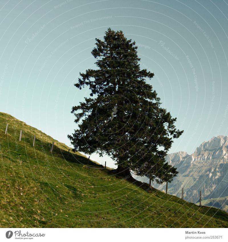 Aufrecht Stehen Natur Pflanze Baum Landschaft Ferne Wald Berge u. Gebirge natürlich Gesundheit Freiheit oben Felsen Zufriedenheit Wachstum Kraft authentisch