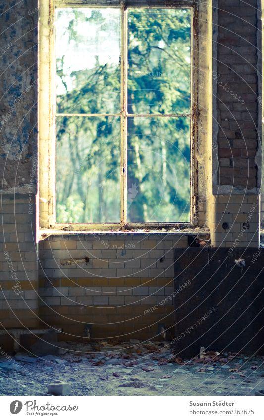 geht woanders ein Fenster auf... Kunst Natur Garten Haus Ruine Mauer Wand Denkmal alt Vandalismus Heilstätte Unbewohnt leer kaputt Backstein Putz Sanieren Baum