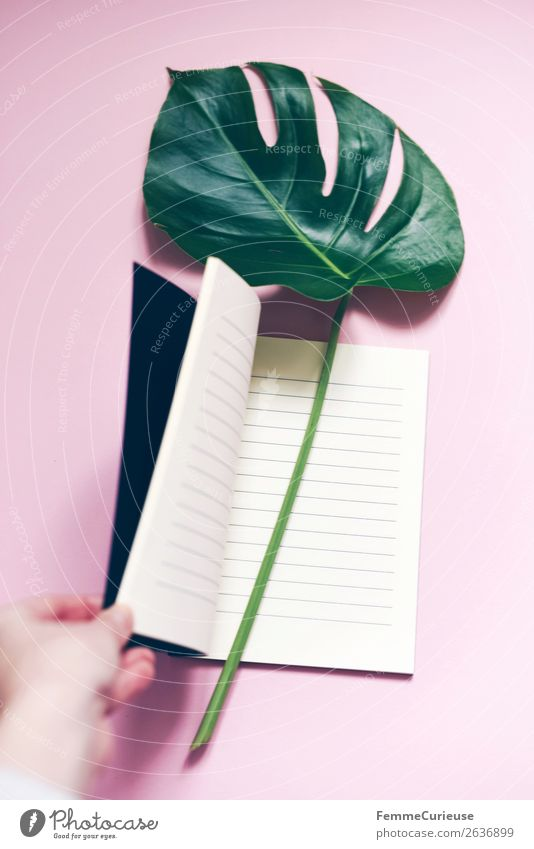Stem and leaf of a monstera lying in a book Schreibwaren Papier ästhetisch Notizbuch leer liniert Fensterblätter Blatt Stengel rosa Pastellton