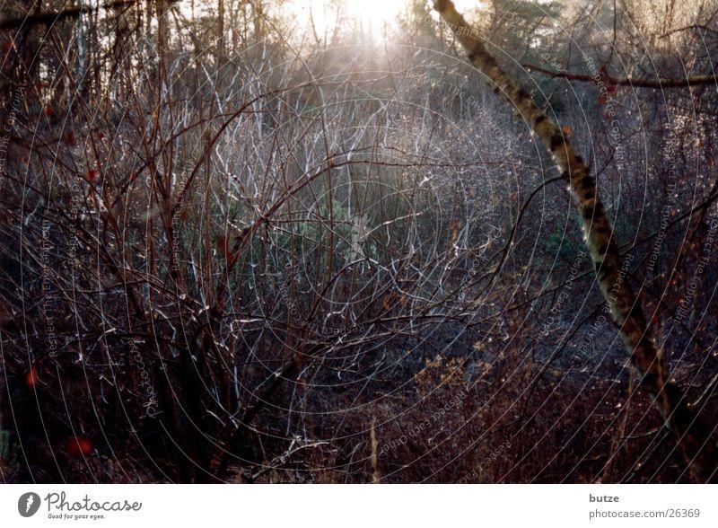 Wintersonne Baum Sonne kalt Frost