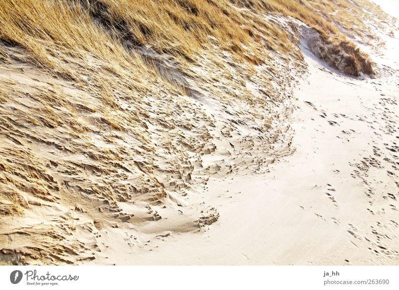 Nordsee III Wind Erholung Dünengras Gezeiten Ebbe Flut Strand Sand Meer Sturm Wasser Sonnenlicht Herbst Ferien & Urlaub & Reisen Spaziergang wandern Seegatt