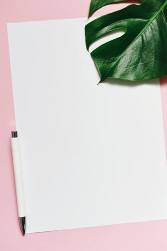 White sheet of paper & the leaf of a monstera on pink background Natur Pflanze grün weiß Blatt rosa Design Kreativität leer Papier schreiben Zettel Schreibwaren
