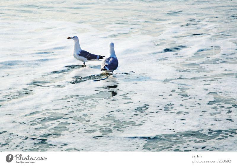 Nordsee V Vogel listig Ostsee Meer Sylt Gezeiten Ebbe Flut Strand Sand Wind Wellen Meerwasser Möwe Gischt Sonnenlicht Ferien & Urlaub & Reisen Sommer