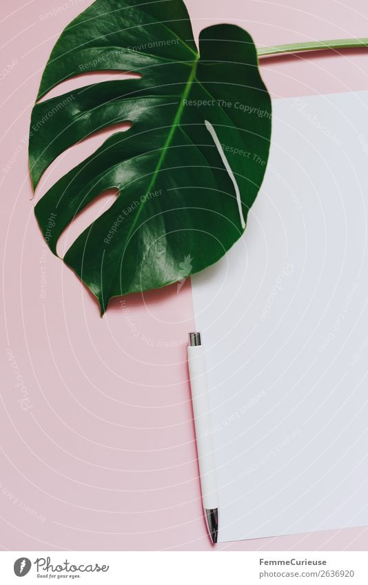 White sheet of paper & the leaf of a monstera on pink background Pflanze grün weiß rosa Design Dekoration & Verzierung Kreativität leer Papier schreiben Zettel