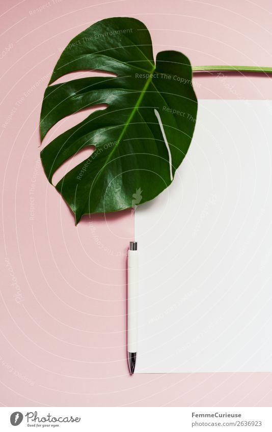 White sheet of paper & the leaf of a monstera on pink background Lifestyle Schreibwaren Papier Zettel Kreativität Fensterblätter rosa grün Kugelschreiber leer