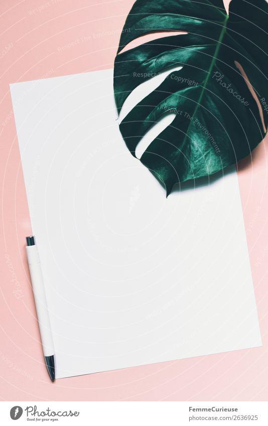 White sheet of paper & the leaf of a monstera on pink background Pflanze Blatt rosa Design Kommunizieren Kreativität leer Papier Zettel Schreibwaren Grünpflanze
