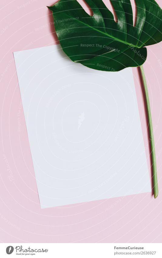 Paper & the leaf of a monstera on pink background Natur Schreibwaren Papier Zettel Kreativität Design Fensterblätter Pflanze Pflanzenteile rosa weiß leer