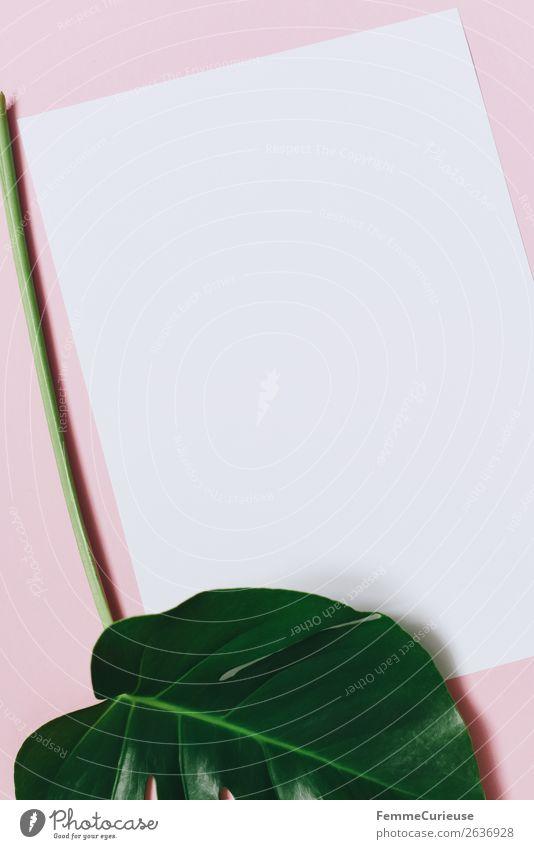 White sheet of paper & the leaf of a monstera on pink background Natur Pflanze grün weiß Blatt rosa Design modern ästhetisch Kreativität Papier Stengel