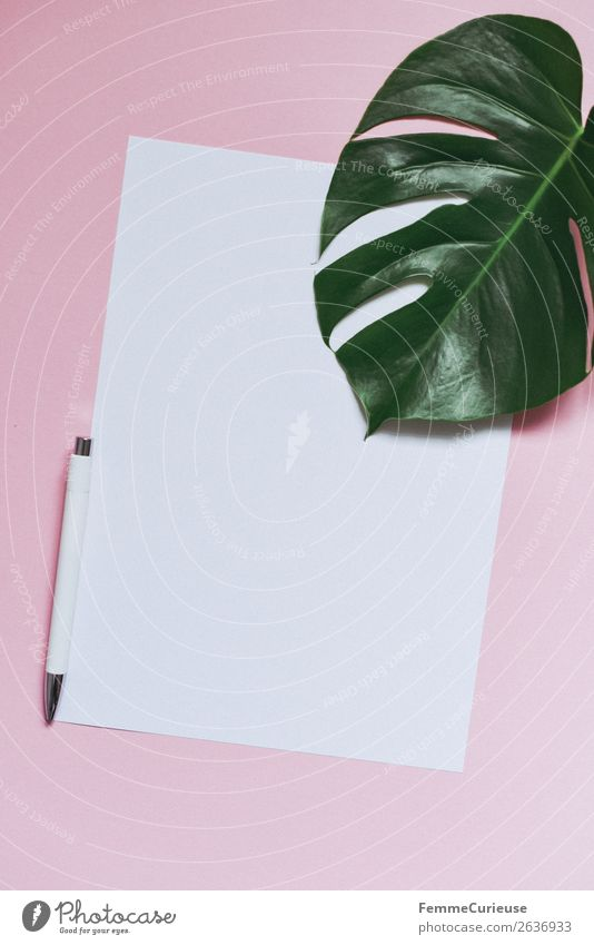 White sheet of paper & the leaf of a monstera on pink background Pflanze weiß Blatt Stil rosa Dekoration & Verzierung Kommunizieren leer Papier Schreibwaren