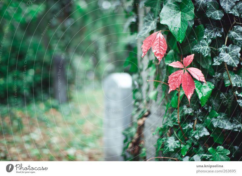 rot auf grün Natur grün rot Pflanze Blatt Einsamkeit ruhig Tod Herbst Religion & Glaube Garten Stein Park Regen natürlich Wassertropfen