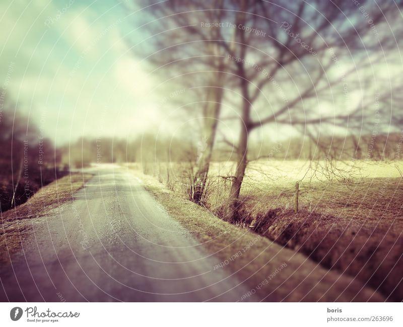 Ipweger Moor Landschaft Winter Feld Deutschland Europa Menschenleer Verkehrswege Wege & Pfade braun gelb grau Einsamkeit Farbfoto Gedeckte Farben Unschärfe