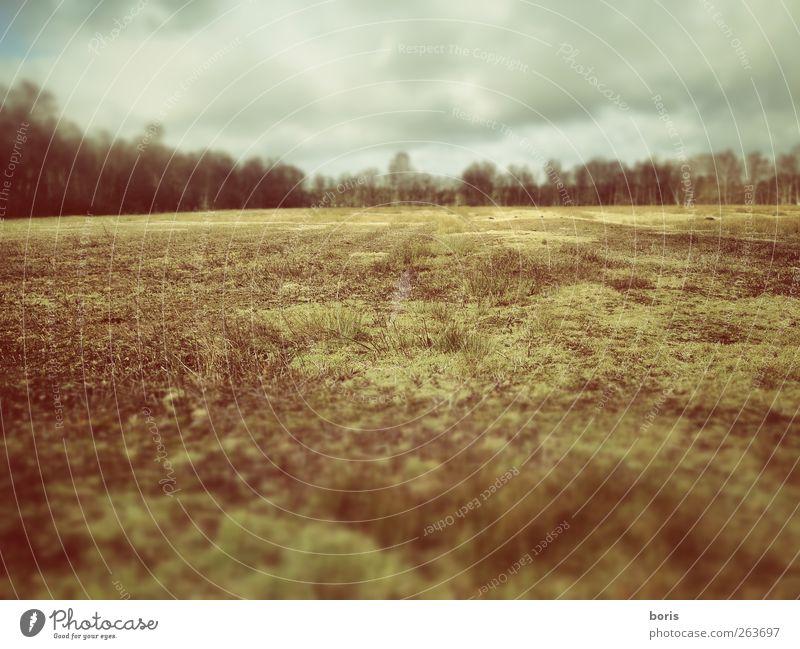 Ipweger Moor Natur Winter Einsamkeit ruhig Ferne gelb Landschaft Wiese kalt grau Gras braun Fotografie Europa Bundesadler Sumpf