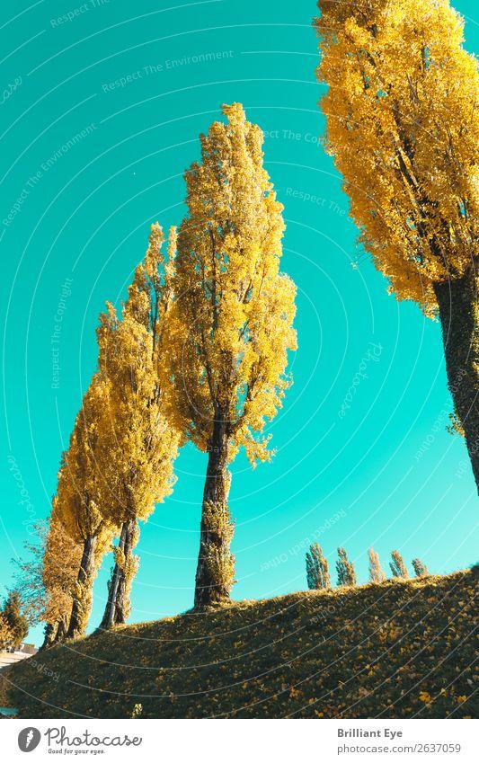 Sattes Gelb Umwelt Natur Himmel Sonne Herbst Schönes Wetter Baum Wiese ästhetisch einfach frisch hell Wärme mehrfarbig gelb Energie Erholung Farbe Idylle Leben