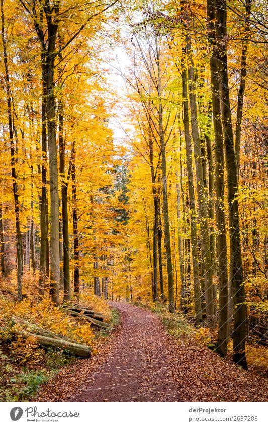 Herbstlicher Weg in gelbem Wald Ferien & Urlaub & Reisen Tourismus Ausflug Abenteuer Ferne Freiheit Expedition Camping Berge u. Gebirge wandern Umwelt Natur