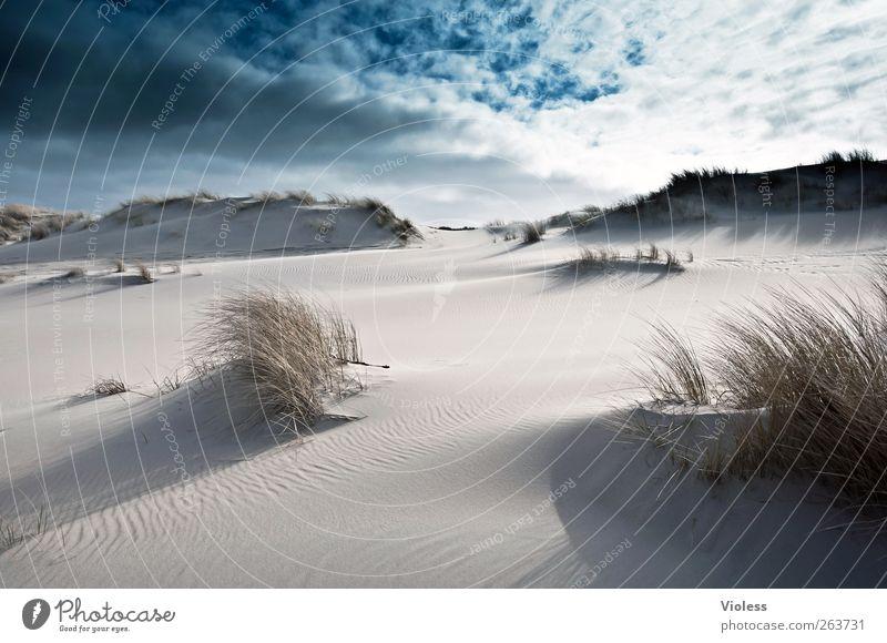 Déjà-vu Natur Landschaft Sand Himmel Wolken Strand Nordsee Insel entdecken Erholung Spiekeroog Dünengras Gegenlicht Farbfoto Außenaufnahme Tag Licht Sonnenlicht