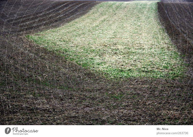 frostige zeiten... Umwelt Natur Landschaft Erde Winter Feld braun grün Wetter Frost Klima Furche kalt Kontrast Wachstum Schneise Jahreszeiten Ackerbau