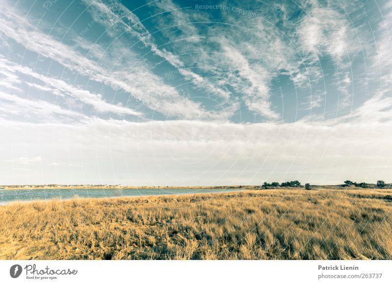 Just Himmel Natur blau Ferien & Urlaub & Reisen Pflanze Wolken Einsamkeit Ferne Umwelt Landschaft Wiese Frühling Luft Wetter Perspektive Sträucher