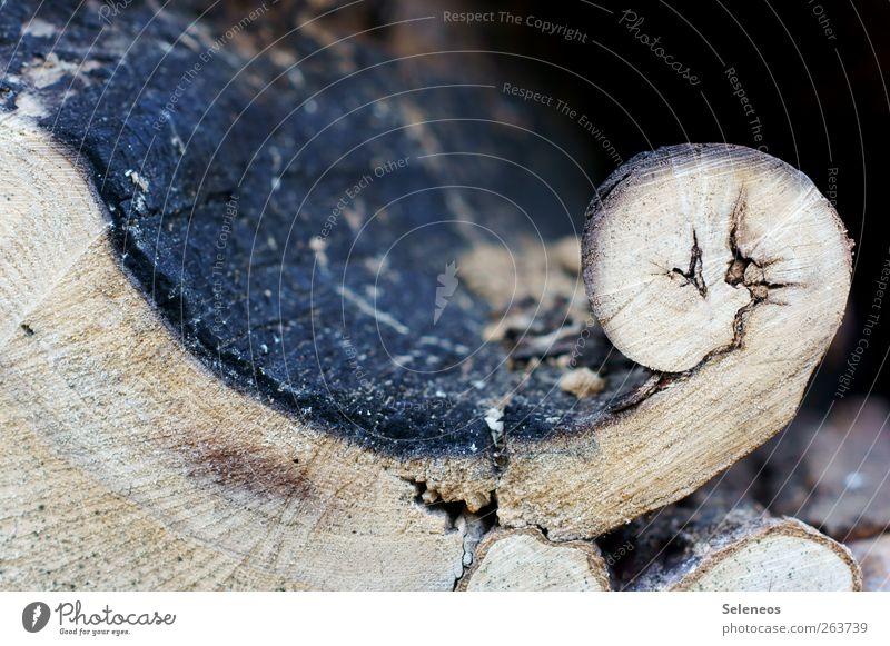 wo gehobelt wird Natur Pflanze Umwelt natürlich Holz außergewöhnlich Baumstamm Baumrinde rollen verdreht gekrümmt Strukturen & Formen Nahaufnahme Dinge