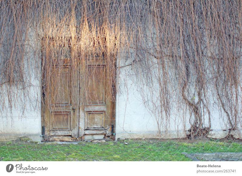 Ich trage mein Haar offen alt weiß grün Haus Wand Gefühle Mauer braun Tür ästhetisch einzigartig Verfall vertrocknet Efeu Mauerpflanze Holztür