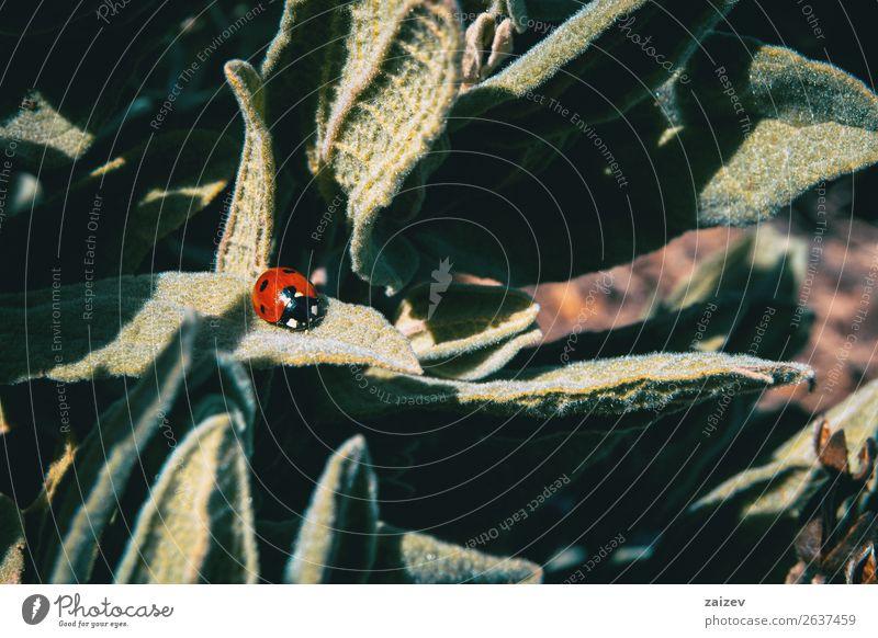 Natur Sommer Pflanze Farbe schön grün rot Blume Tier Blatt schwarz Umwelt natürlich Wiese Gras klein