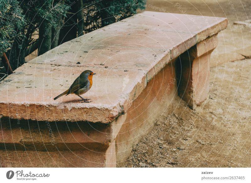 Nahaufnahme eines kleinen Vogels auf einer Steinbank im Park Garten Geldinstitut Sänger Natur Tier Baum Wald Felsen niedlich wild braun rot Farbe