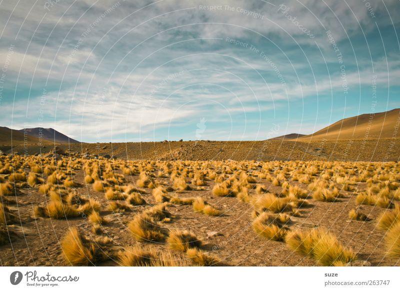 Wildes Land Umwelt Natur Landschaft Urelemente Erde Sand Luft Himmel Horizont Sommer Klima Wetter Schönes Wetter Hügel Wüste außergewöhnlich trist trocken blau