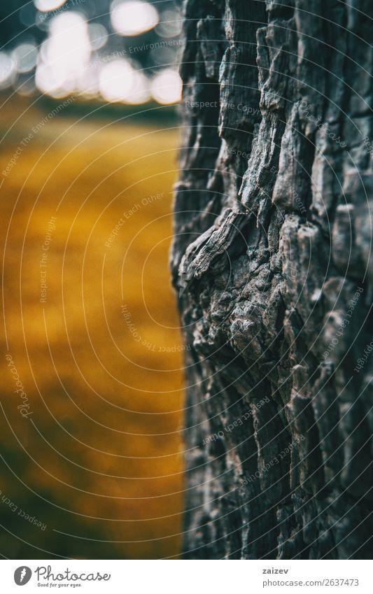 Detail der Rinde eines Baumes in der Natur Berge u. Gebirge Park Wald Papier Rust Hinweisschild Warnschild alt verblüht braun gelb grün weiß Baumrinde