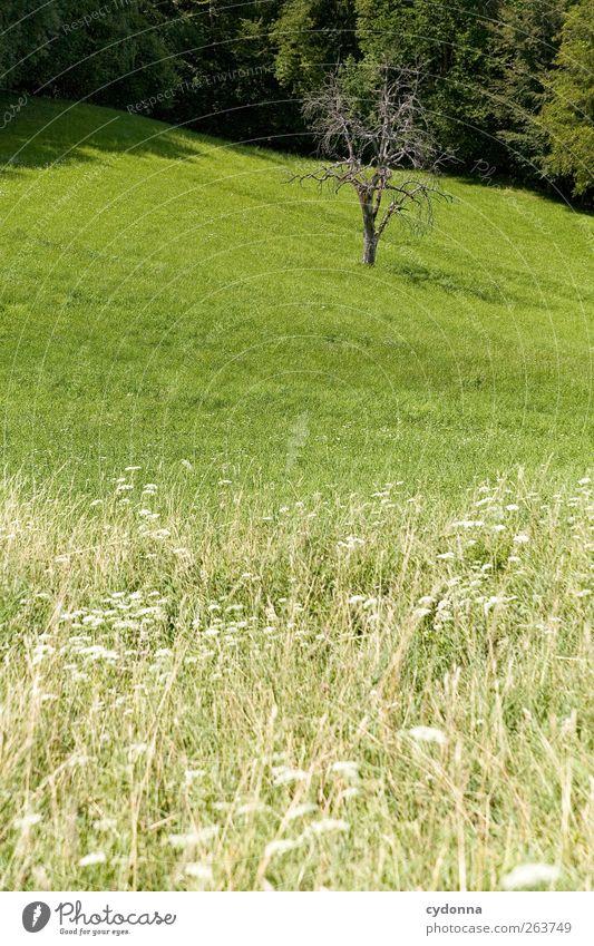 Einer geht noch! Natur Baum ruhig Umwelt Landschaft Wiese Gras Frühling ästhetisch Wachstum Wandel & Veränderung Schönes Wetter stagnierend grünen laublos