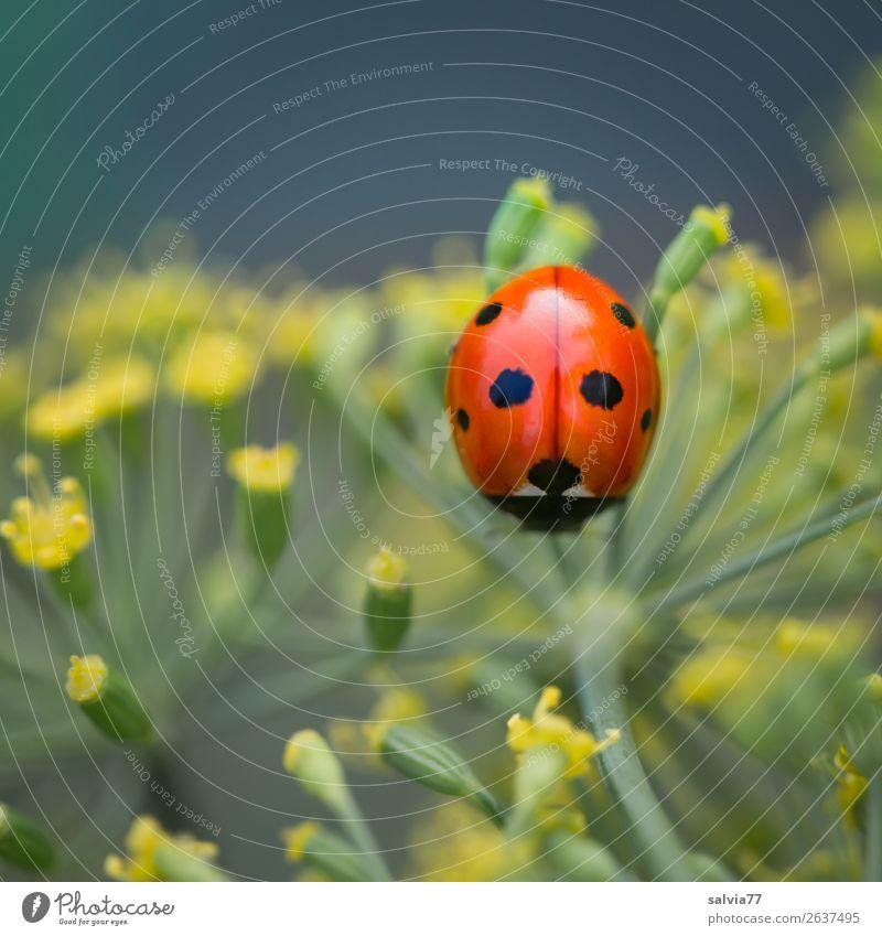 Viel Glück! Natur Sommer Pflanze Farbe grün Blume Tier gelb Umwelt Blüte Garten orange ästhetisch einzigartig niedlich