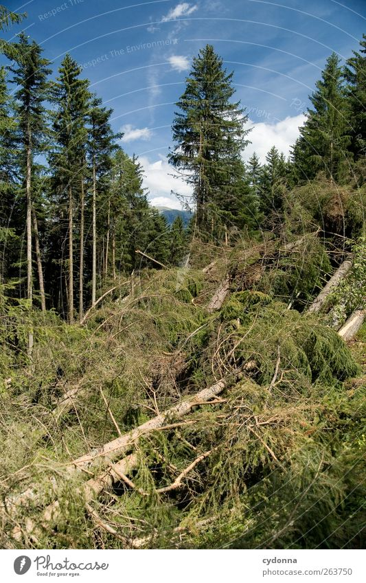 Der Wald vor lauter Bäumen Himmel Natur Baum Sommer Wald Umwelt Landschaft Zeit liegen Wandel & Veränderung Vergänglichkeit Ende Schönes Wetter Verfall Baumstamm chaotisch