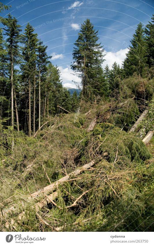 Der Wald vor lauter Bäumen Himmel Natur Baum Sommer Umwelt Landschaft Zeit liegen Wandel & Veränderung Vergänglichkeit Ende Schönes Wetter Verfall Baumstamm