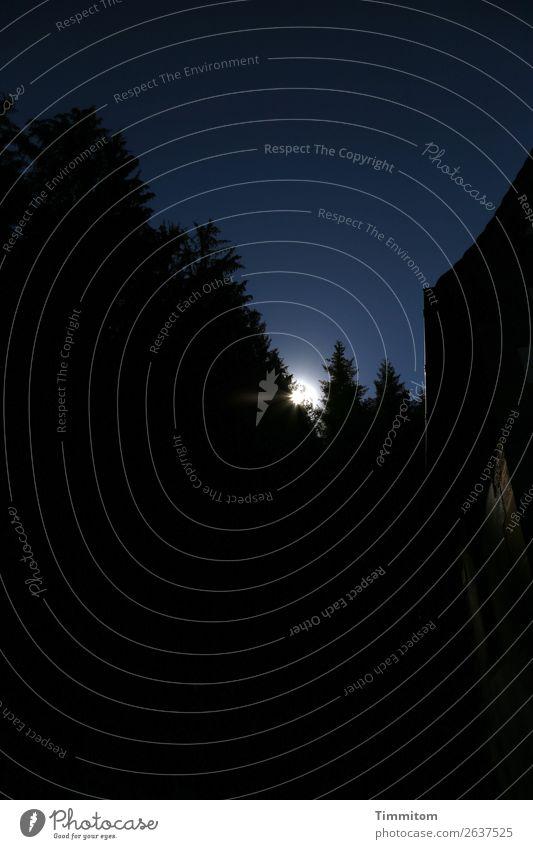 Black Friday Umwelt Natur Pflanze Himmel Sonne Baum Fichte Wald Hügel Mauer Wand Dach dunkel blau schwarz weiß Gefühle Licht Hoffnung Farbfoto Außenaufnahme